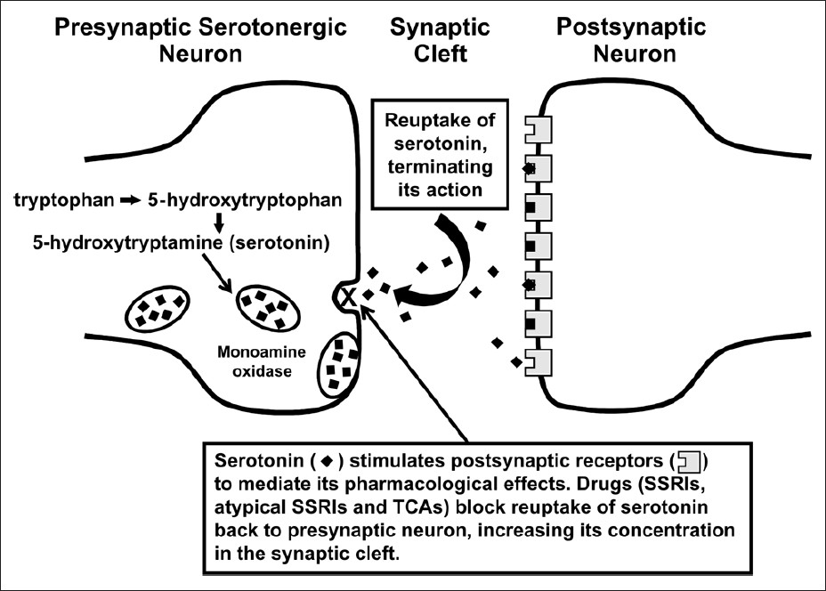 Figure 1: This figure illustrates the synthesis of the neurotransmitter, serotonin, the storage of serotonin in storage vesicles, its release from the neuron into the synaptic site and activation of postsynaptic receptors, its re-uptake back to nerve ending and the re-uptake blockade by specific serotonin re-uptake inhibitors (SSRIs), atypical SSRIs and tricyclic antidepressants